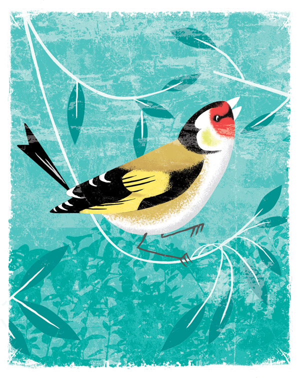 arena-illustration_david-hitch_birds-goldfinch