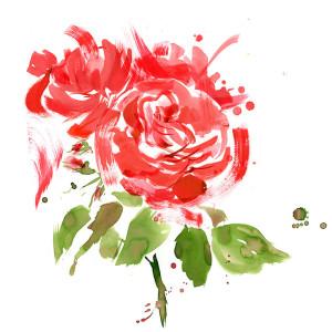 Sarah_Maycock_rose_bush