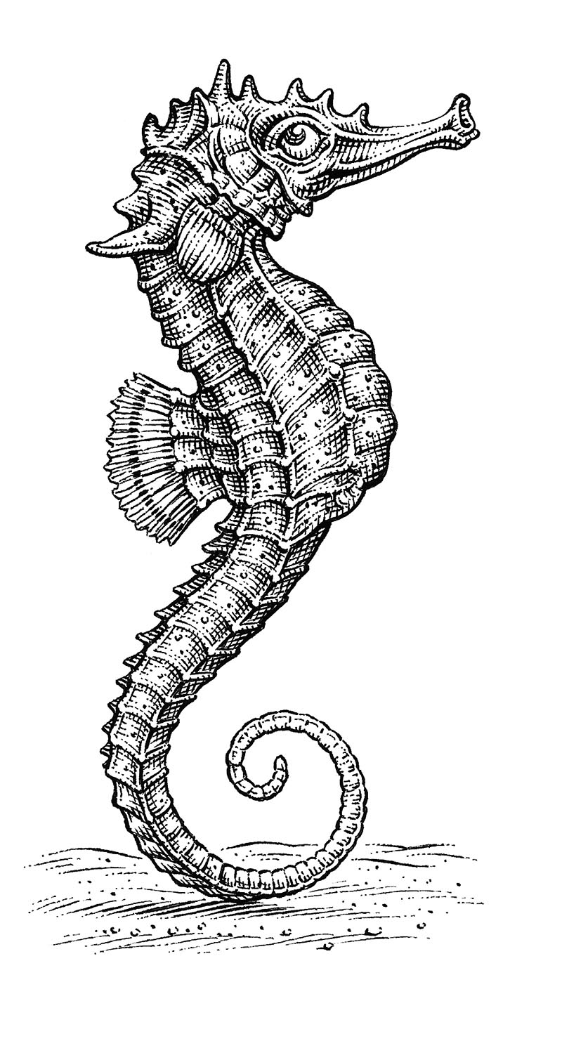 Seahorse by Dave Hopkins