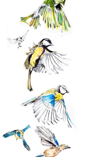 port_birds_repo_900