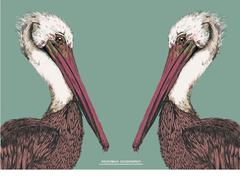 port_pelican_web_900