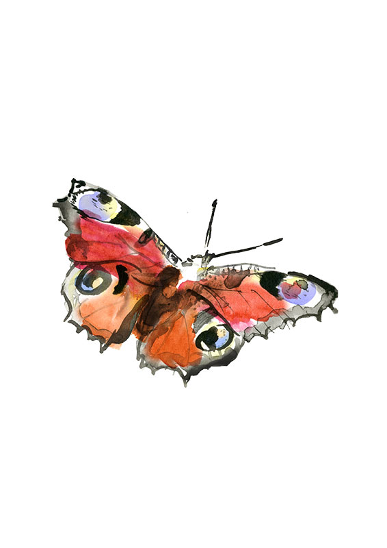 SM_WS_butterfly